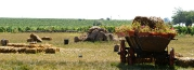 Dealurile de creta acoperite cu vita de vie_12