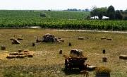 Dealurile de creta acoperite cu vita de vie