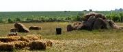 Dealurile de creta acoperite cu vita de vie_8