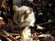 Rezervatia naturala Fantanita–Murfatlar