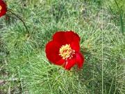 Flora_41