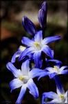 Flora_52